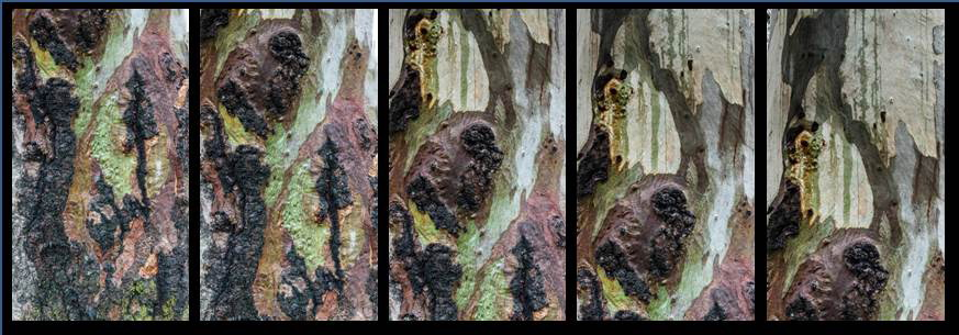 tree_1615_collage